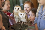 """Barney"" and ""Bosco"" the barn owls"