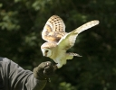 """Barney"" the barn owl"